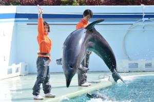 イルカショーを披露する松岡茉優(左)と桐谷健太