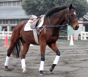 塚田僚一が乗った馬